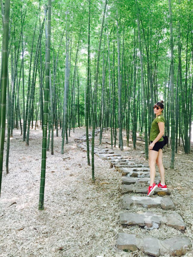 Yixing bamboo forest